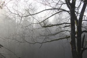 Mist and bare branches