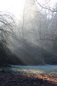 sun shining through the fog